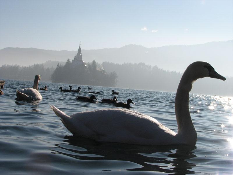Bled, Slovenija