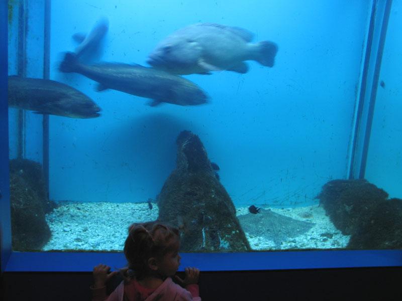 Akvarij